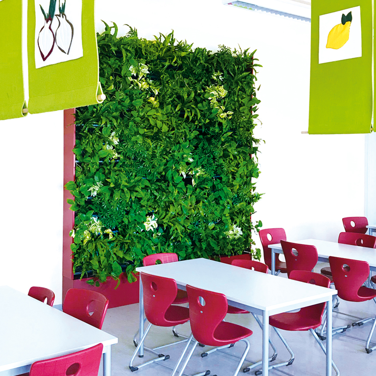 Pflanzenwand Schulmensa