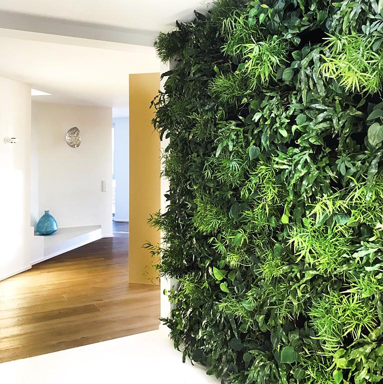 Pflanzenwand Privatwohnung
